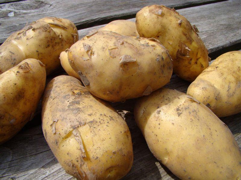 Aardappel voor FRIETJES (1 kilo)