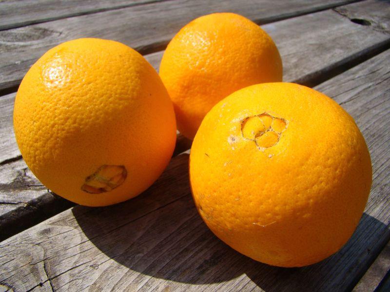 Sinaasappel hand