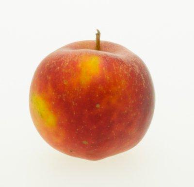 Goudreinette (per kilo)