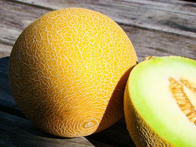 Meloen GALIA
