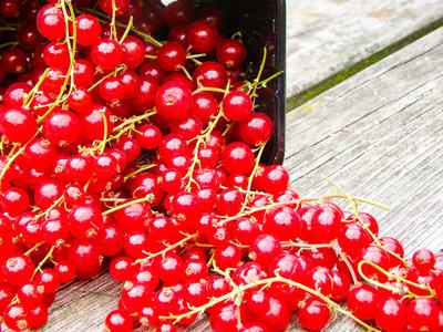 Rode bessen (±450 gr)