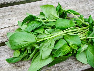 Basilicum (20 gram)