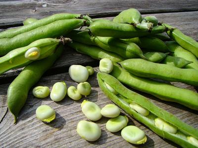 Tuinbonen (500 gram)