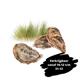 Franse oester Gillardeau